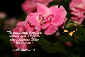 Ecclesiastes 3:1, Scripture Glimpses